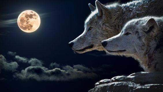 wolf-torque-wolf-moon-cloud-45242